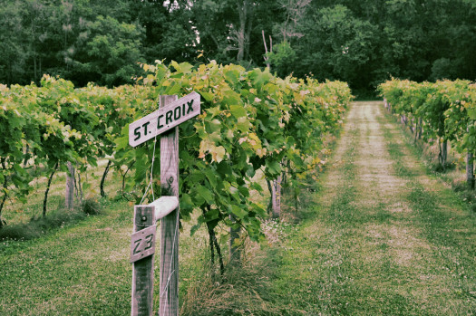 Minnesota: Growing Grapes & Making Wine