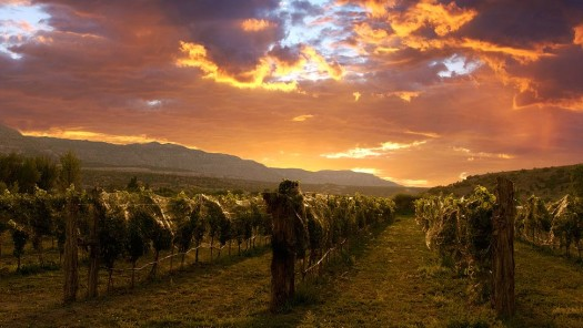 Colorado Wine: It's a Journey, Not a Destination